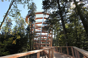 Experience Treetop walk & Spa